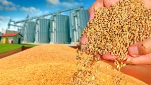 UE27 și Marea Britanie se așteaptă la o recoltă mare de grâu. Semne de întrebare cu privire la calitate