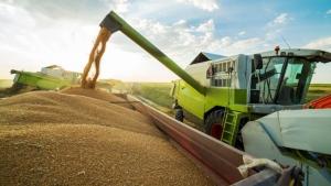 Romania, Bulgaria Confirmed Record: 18.5m Metric Tonnes EU Black Sea Wheat Harvest